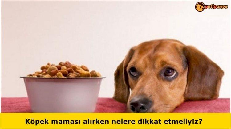 Köpek maması alırken nelere dikkat etmeliyiz?