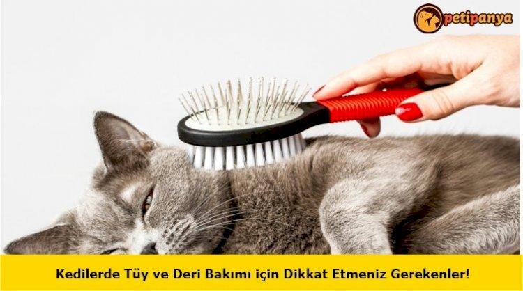 Kedilerde Tüy ve Deri Bakımı için Dikkat Etmeniz Gerekenler!