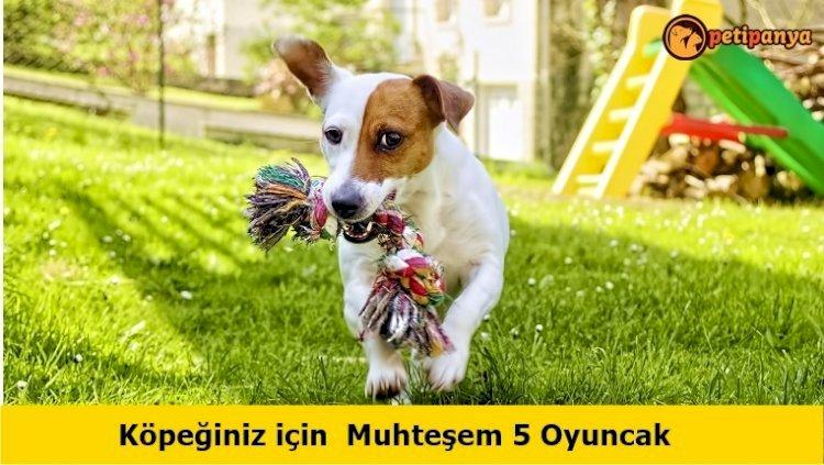 Köpeğiniz için Muhteşem 5 Oyuncak