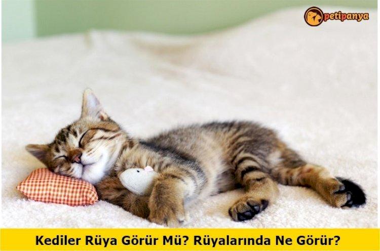 Kediler Rüya Görür Mü? Rüyalarında Ne Görür?