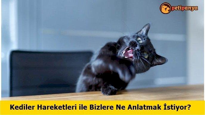 Kedilerin Beden Dili ve Anlamları